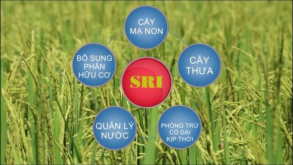 Hiệu quả từ SRI