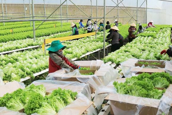 Sản xuất nông nghiệp công nghệ cao giúp nông dân làm giàu tại tỉnh Lâm Đồng. Ảnh: ĐOÀN KIÊN