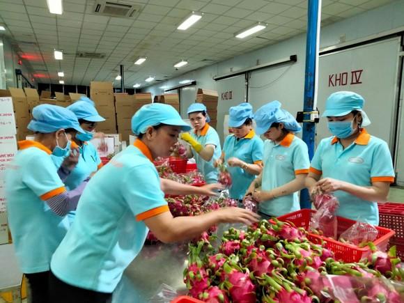Nông sản Việt được đóng gói để xuất khẩu