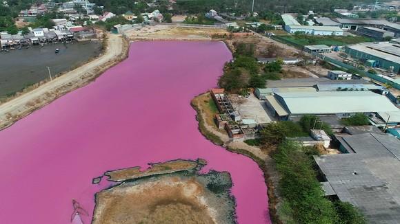 Hồ chứa nước thuộc cống số 6, xã Tân Hải, thị xã Phú Mỹ (Bà Rịa - Vũng Tàu), nước hồ chuyển từ màu đen đặc sang màu tím, bốc mùi hôi thối, khó chịu. Ảnh: NGUOILAODONG