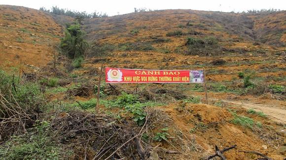 Tạo vùng sinh cảnh  cho voi rừng ảnh 2