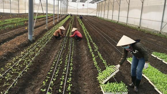 Sản xuất nông nghiệp hữu cơ đầu tư chi phí nhiều  nên giá thành cao khiến người tiêu dùng còn e ngại