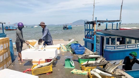 Kiên Giang và Cà Mau chung tay chống khai thác thủy sản bất hợp pháp