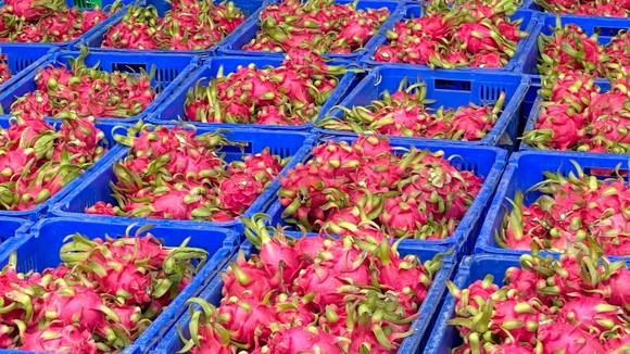 Giám sát mã số vùng trồng nông sản xuất khẩu ảnh 1