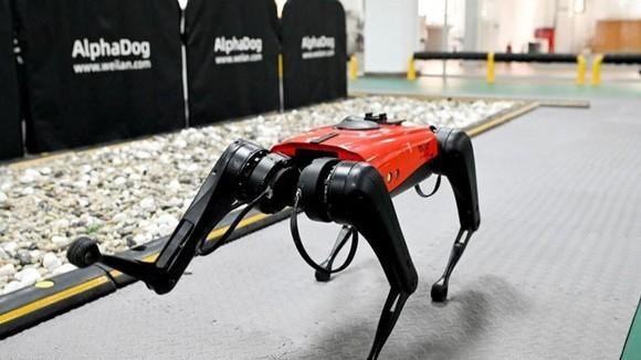 Trung Quốc: Phát triển chó công nghệ có tốc độ nhanh nhất