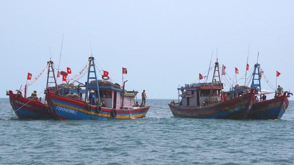 Các tàu giã cào đánh bắt sai vùng biển quy định bị bắt giữ