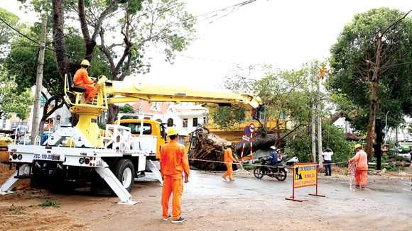 Khắc phục sự cố lưới điện do bão làm cây cổ thụ ngã tại TP. Vũng Tàu