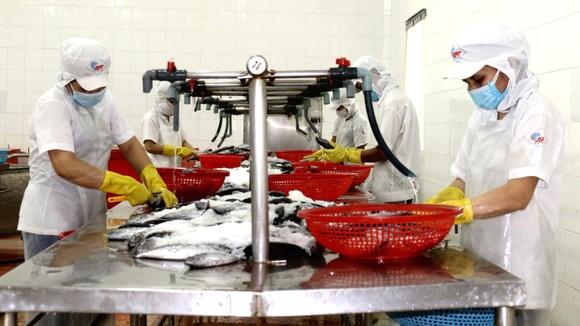 Công nhân Công ty cổ phần Kinh doanh thủy hải sản Sài Gòn tăng ca sản xuất