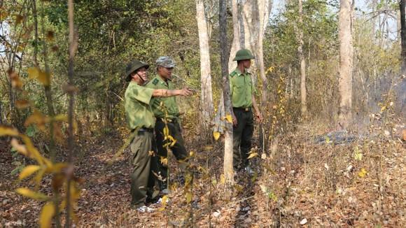 Lực lượng kiểm lâm Vườn quốc gia Yok Đôn tuần tra bảo vệ rừng. Ảnh: ĐÔNG NGUYÊN