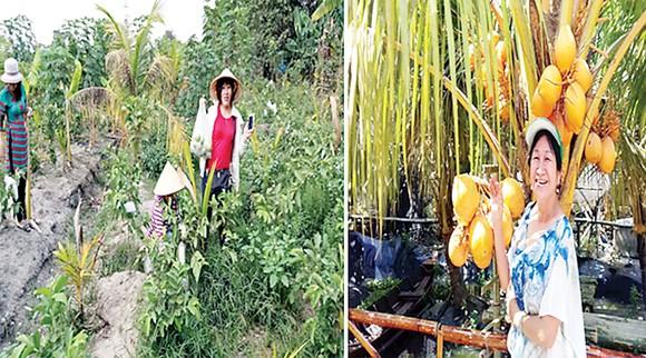 Đi hái trái cây, rau vườn các loại ở Sài Gòn ảnh 1