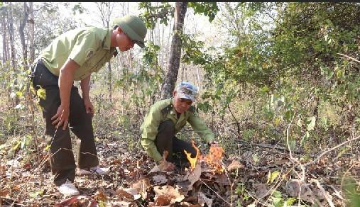 Tây Nguyên khẩn cấp phòng chống cháy rừng ảnh 1