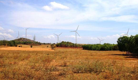 Hạn hán kéo dài, sa mạc hóa ngày càng lan rộng khiến hàng loạt khu vực ở huyện Tuy Phong (tỉnh Bình Thuận) không thể sản xuất. Ảnh: NGUYỄN TIẾN