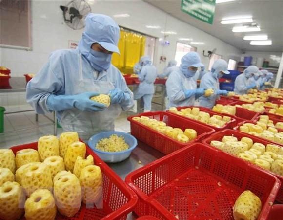 Chế biến sản phẩm dứa đóng hộp tại nhà máy của Công ty CP xuất nhập khẩu nông sản An Giang. Ảnh: TTXVN