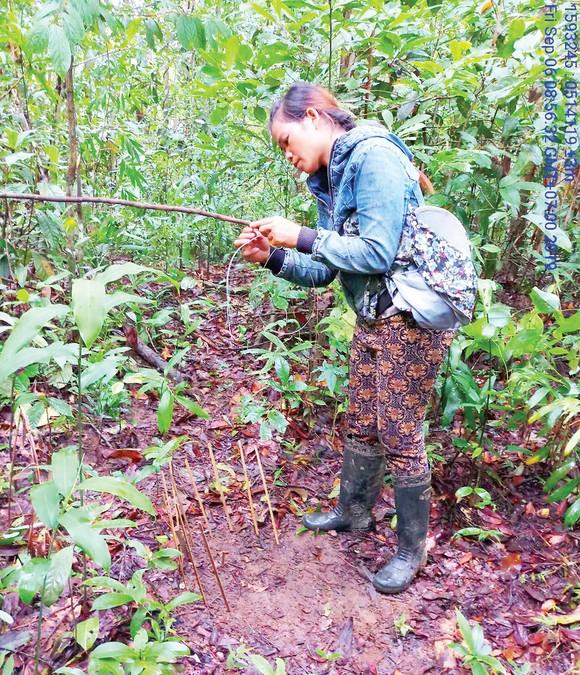 Vườn Quốc gia Chư Mom Ray tăng cường công tác bảo vệ, phòng chống cháy rừng ảnh 1