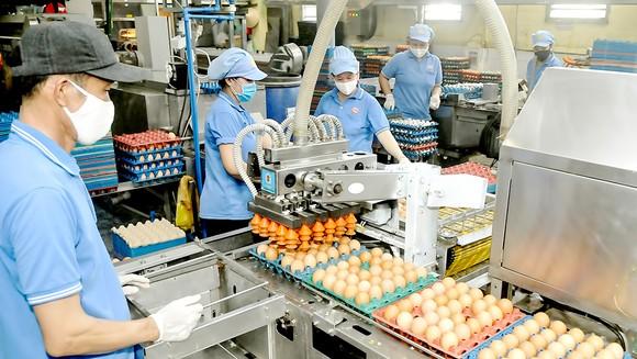 Sử dụng robot chế biến trứng gia cầm, cung ứng thực phẩm bình ổn thị trường tại Công ty CP Vĩnh Thành Đạt, TPHCM. Ảnh: CAO THĂNG