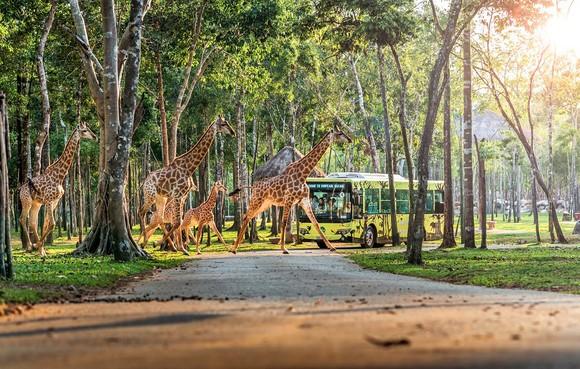 Vingroup khai trương Siêu quần thể nghỉ dưỡng, vui chơi, giải trí hàng đầu Đông Nam Á - Phú Quốc United Center ảnh 14