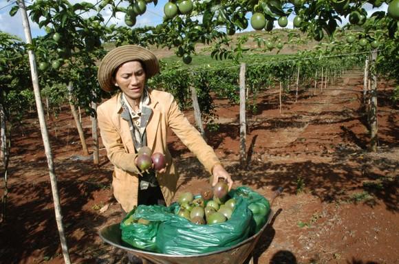 Giao dịch thương mại Việt Nam - EU: Bắt nhịp sôi động ảnh 1