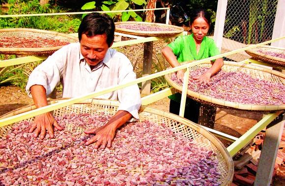 Xuất khẩu nông sản vào thị trường Mỹ: Tận dụng tốt vai trò doanh nghiệp kiều bào ảnh 1