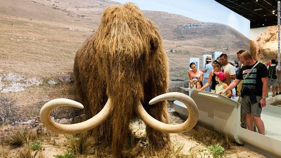 Một mô hình voi mammoth