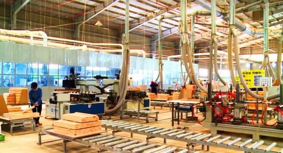 Thủ phủ xuất khẩu gỗ trầm lắng ảnh 1