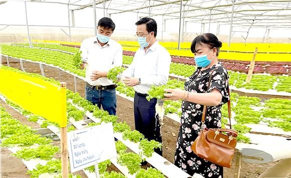 Lãnh đạo Sở Công thương TPHCM thực tế tại một trang trại trồng xà lách thủy canh  ở Lâm Đồng để cung ứng thị trường tết.