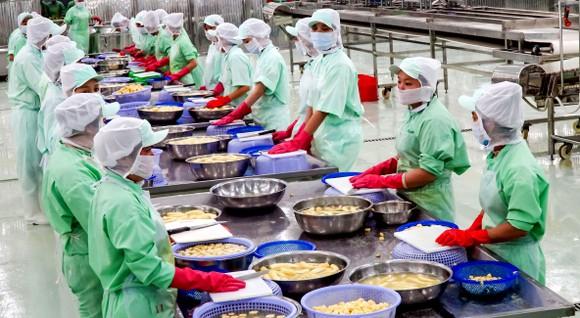 Chế biến chuối sấy lạnh xuất khẩu tại Công ty Thuận Phong Ảnh: HOÀNG HÙNG