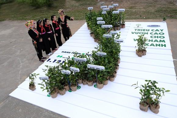 Hơn 1 triệu cây xanh đã được trao cho nhiều tỉnh, thành phố trên cả nước
