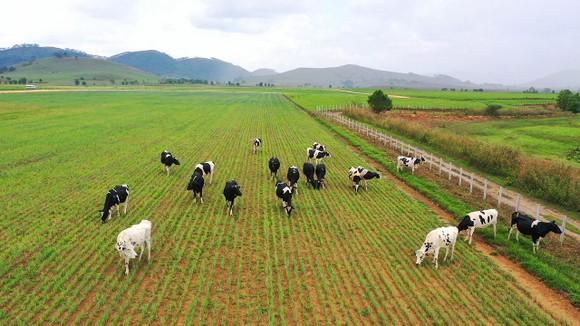 Siêu dự án trang trại của Vinamilk tại Lào sẽ 'cho sữa' vào đầu năm 2022 ảnh 2