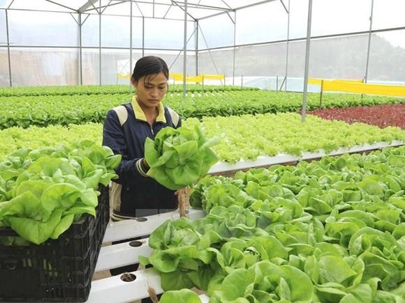 6 tháng, giải ngân đầu tư công trong nông nghiệp ước đạt gần 36%