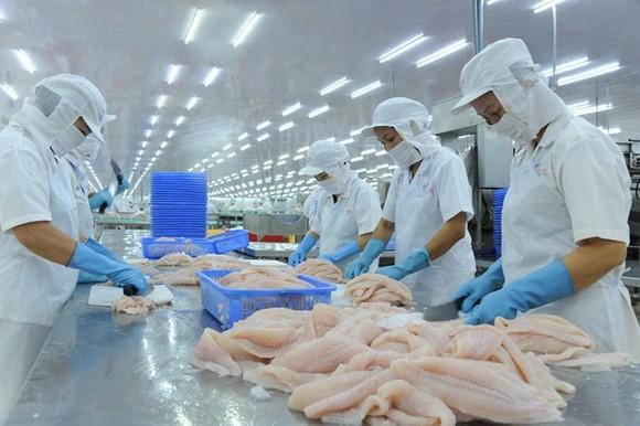Doanh nghiệp thủy sản chưa đồng ý với Dự thảo Nghị định hướng dẫn luật Bảo vệ môi trường 2020