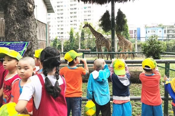 Gia đình hươu cao cổ ở Thảo Cầm viên Sài Gòn có thành viên mới ảnh 1