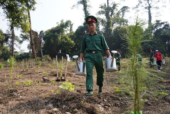 """Phủ xanh 2.000 cây Thông Mã Vĩ trên đồi cây """"Dâng Bác – Ơn Thầy"""" ảnh 10"""
