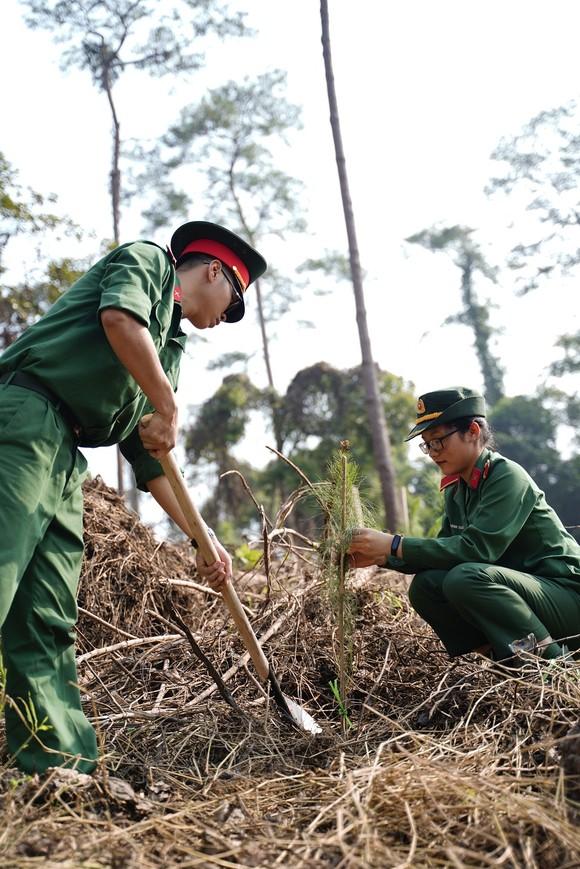 """Phủ xanh 2.000 cây Thông Mã Vĩ trên đồi cây """"Dâng Bác – Ơn Thầy"""" ảnh 12"""