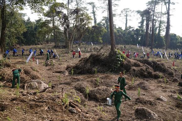 """Phủ xanh 2.000 cây Thông Mã Vĩ trên đồi cây """"Dâng Bác – Ơn Thầy"""" ảnh 8"""