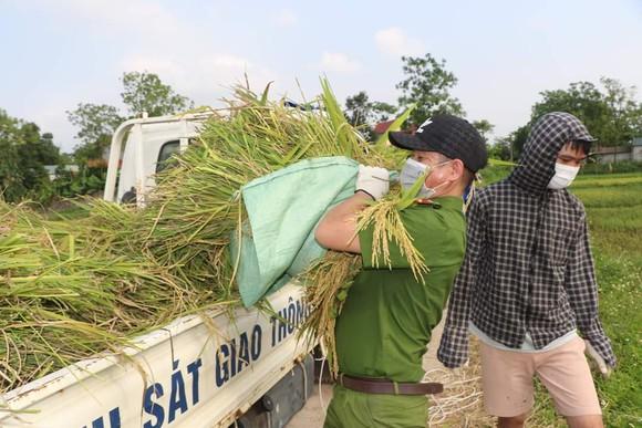 Công an xuống đồng thu hoạch lúa giúp dân đang cách ly y tế ảnh 5