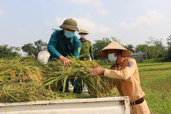 Công an xuống đồng thu hoạch lúa giúp dân đang cách ly y tế ảnh 4