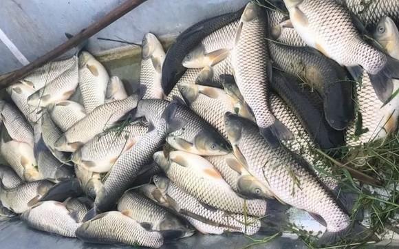 Cá chết trên sông Mã do chất lượng nước không đảm bảo ảnh 1