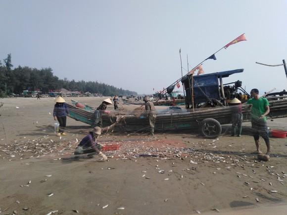 Ngư dân Thanh Hóa 'mở cửa biển', ra khơi đánh bắt đầu năm ảnh 5