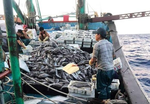 Cứu sống 8 ngư dân bị chìm tàu trên biển ảnh 1