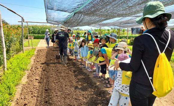 Nông dân tự làm bẫy sinh học, trừ sâu thảo mộc để trồng rau hữu cơ ảnh 16