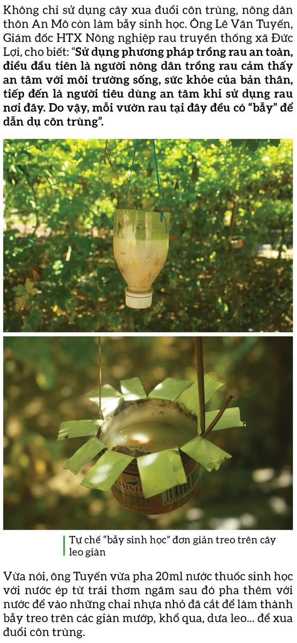 Nông dân tự làm bẫy sinh học, trừ sâu thảo mộc để trồng rau hữu cơ ảnh 7