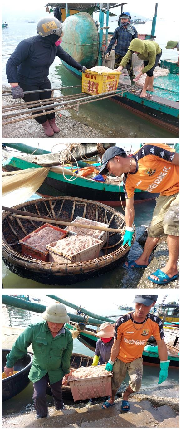 Ngư dân trúng đậm tép biển ảnh 6