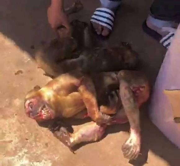 Phát hiện 8 cá thể khỉ bị giết trên xe khách ở Đắk Lắk ảnh 1