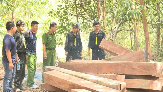 Bắt nguyên giám đốc công ty lâm nghiệp để mất rừng ảnh 2