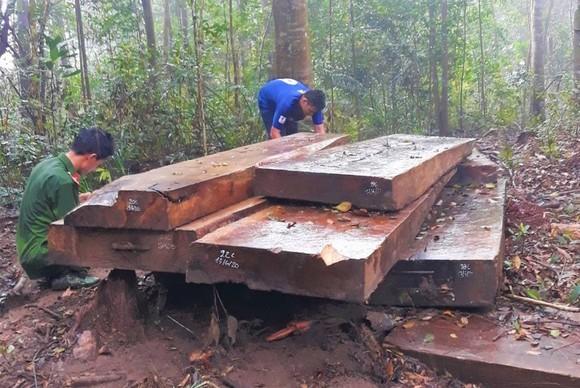 Kỷ luật cảnh cáo Hạt trưởng Hạt kiểm lâm để mất rừng ảnh 1
