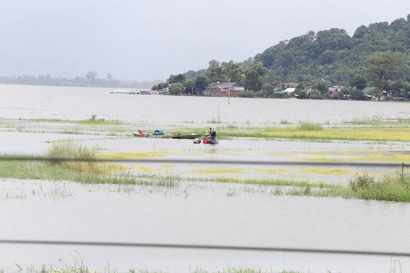 Đắk Lắk: Người dân 'chạy đua' với nước lũ để cứu lúa ảnh 2