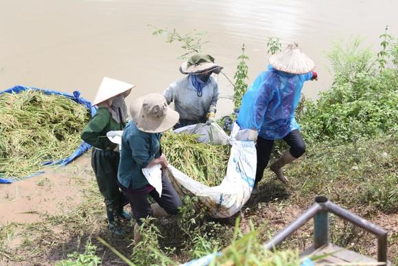 Đắk Lắk: Người dân 'chạy đua' với nước lũ để cứu lúa ảnh 4