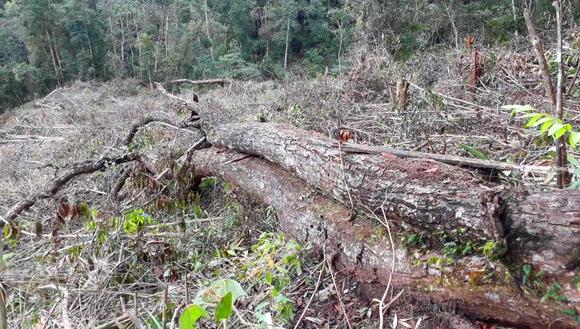 Kon Tum: Phá rừng ở nơi… cấm phá ảnh 2