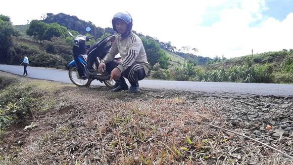 Vụ phát quang quốc lộ bằng thuốc diệt cỏ: Kiểm điểm trách nhiệm tổ chức, cá nhân có liên quan ảnh 1