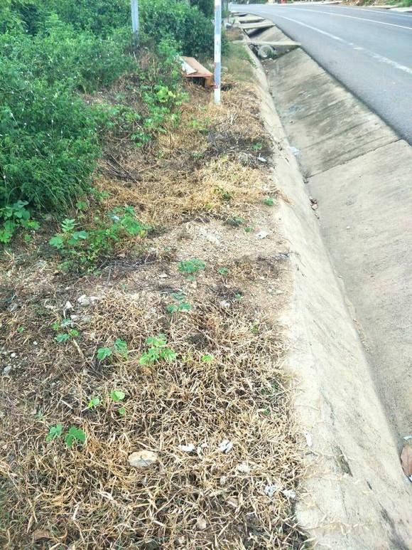 Vụ phát quang quốc lộ bằng thuốc diệt cỏ: Kiểm điểm trách nhiệm tổ chức, cá nhân có liên quan ảnh 2